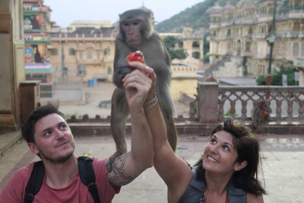 feeding-monkeys-temple-jaipur-india