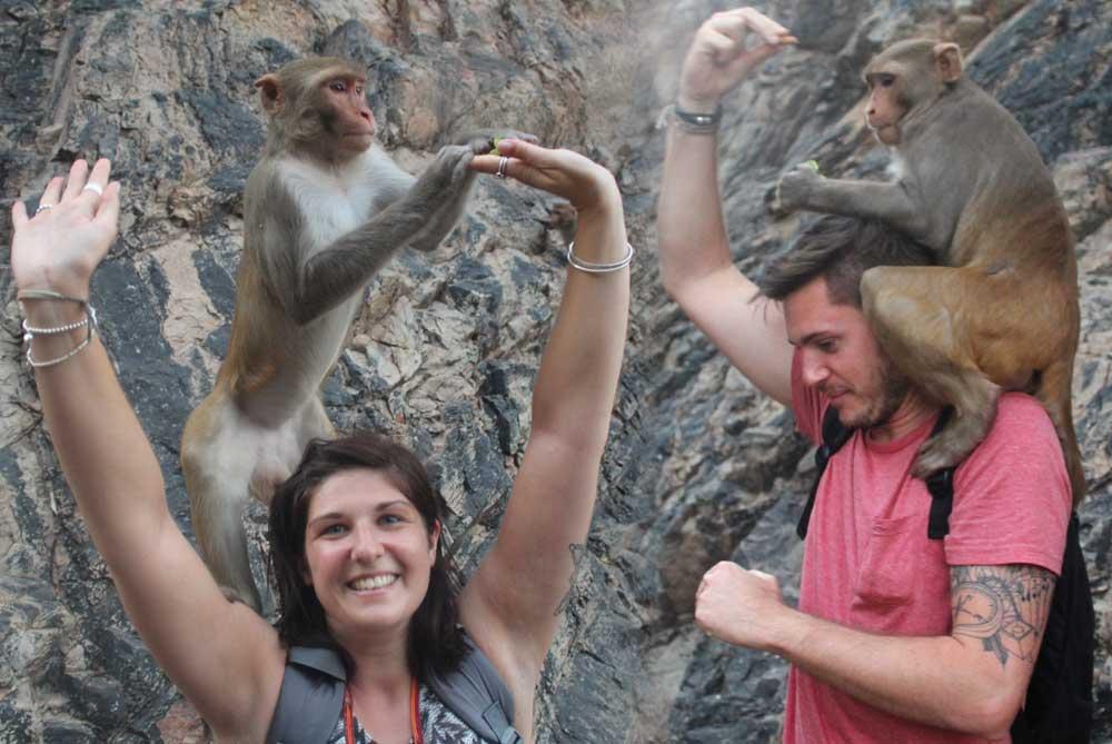 fooling-around-monkeys-temple-jaipur-india