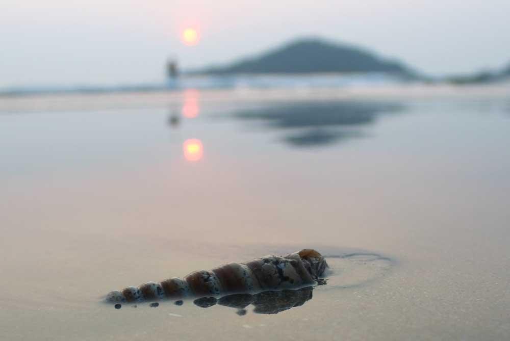 hermet-crab-palolem-beach-goa-india