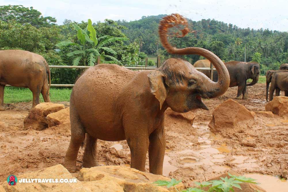 Pinnewala-Elephant-Orphanage-baby-kandy-sri-lanka