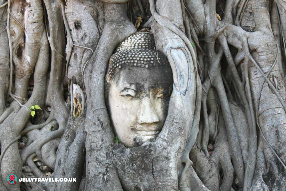 Wat-Maha-That-buddha-head-tree-Ayuthaya-thailand
