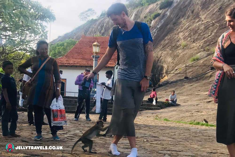 monkeys-dambulla-cave-temple-dambulla-sri-lanka