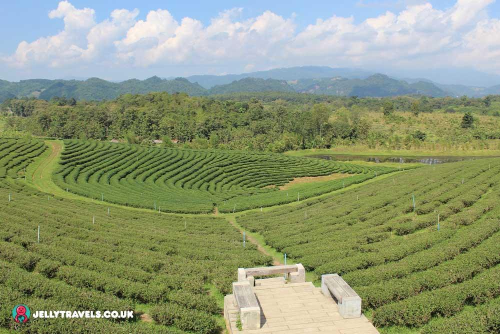 Mae-Chan-Tea-Plantation-chiang-rai-thailand