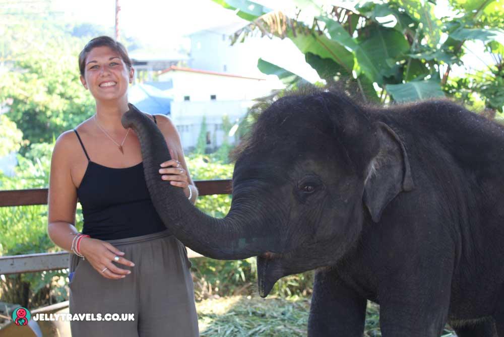 baby-elephant-neema-phuket-thailand