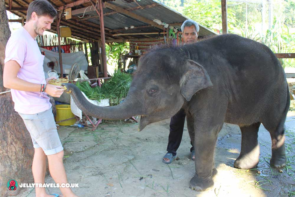 feeding-baby-elephant-neema-phuket-thailand
