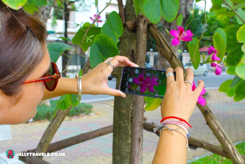 temple-of-literature-gardens-hanoi-vietnam