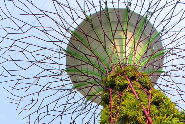 gardens-by-bay-tree-singapore