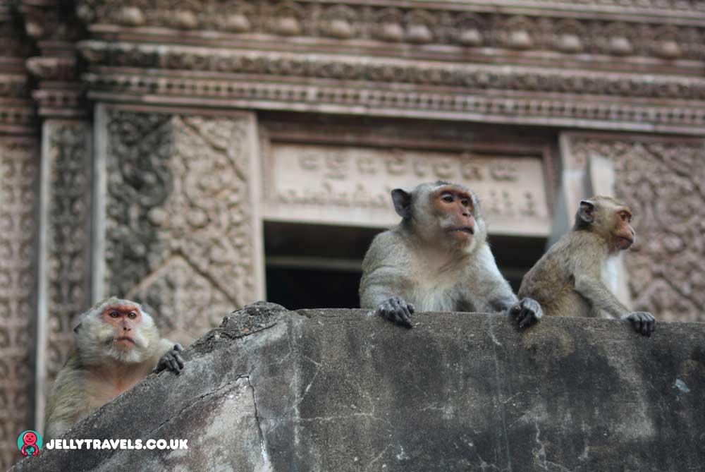 monkeys-at-phnom-sampor-battambang-cambodia