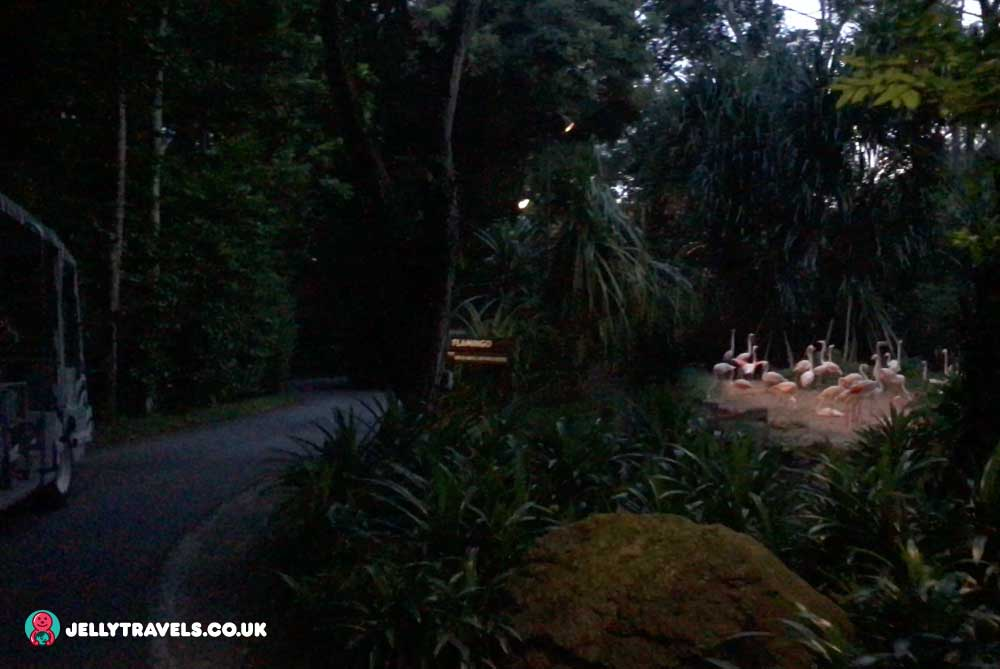 night-safari-singapore