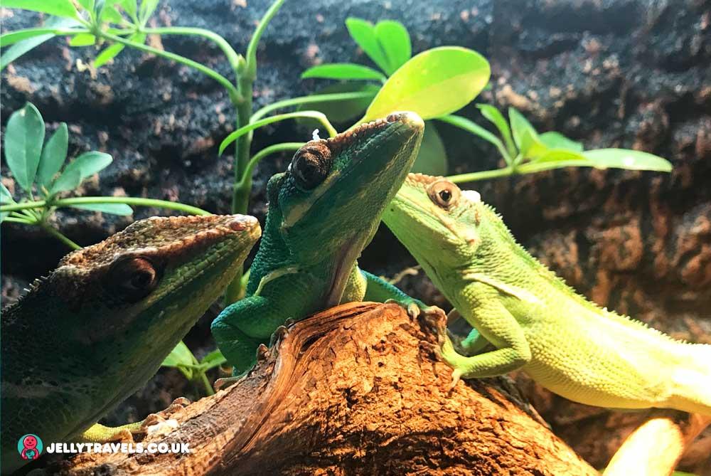 lizards-ocean-park-manila-philippines