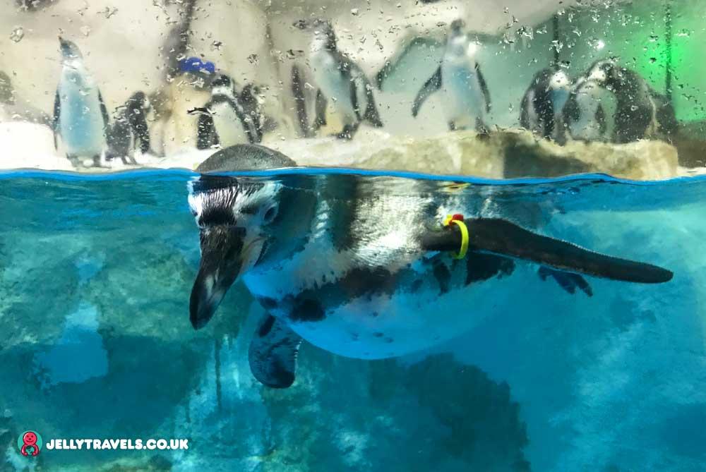 penguins-ocean-park-manila-philippines